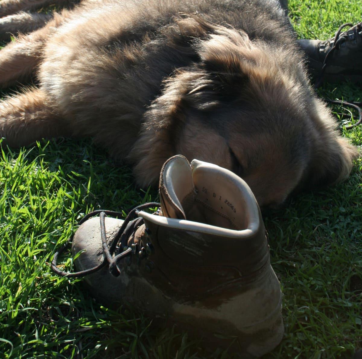 Urlaub mit Hund in Umbrien