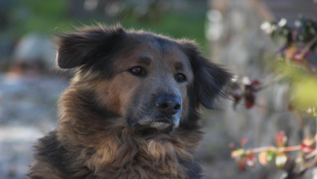 agriturismo-hund