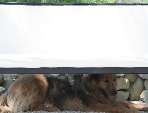 Urlaub mit dem Hund in Umbrien