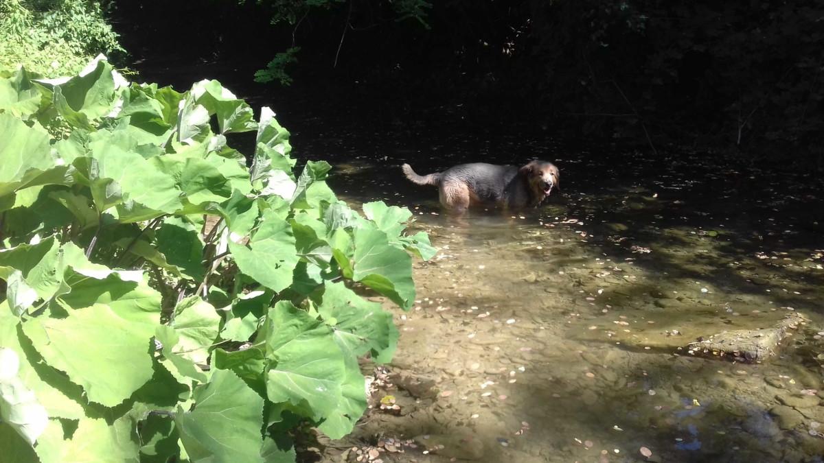 Hund Urlaub Umbrien
